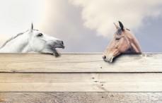 Pferd und Zubehör
